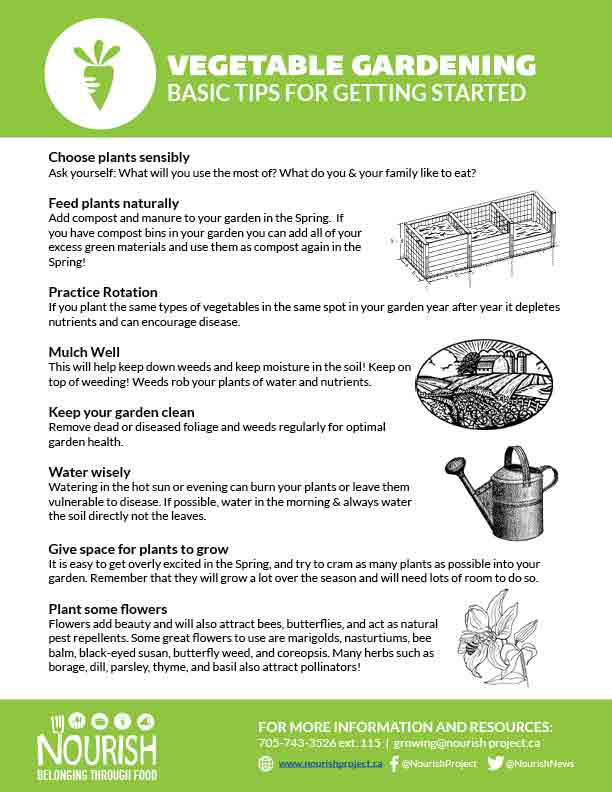 Vegetable gardening basic tips for getting started Nourish Project