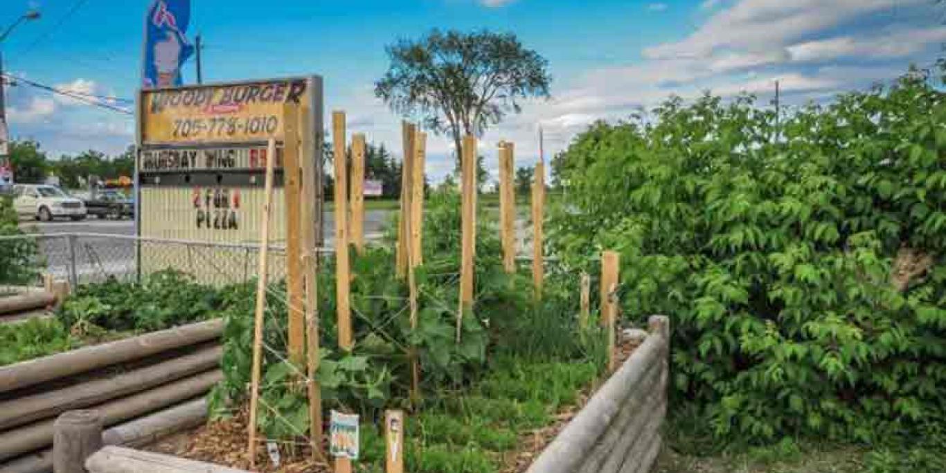 Nourish Havelock Community Garden raised bed