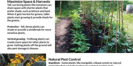 Front page of companion planting factsheet
