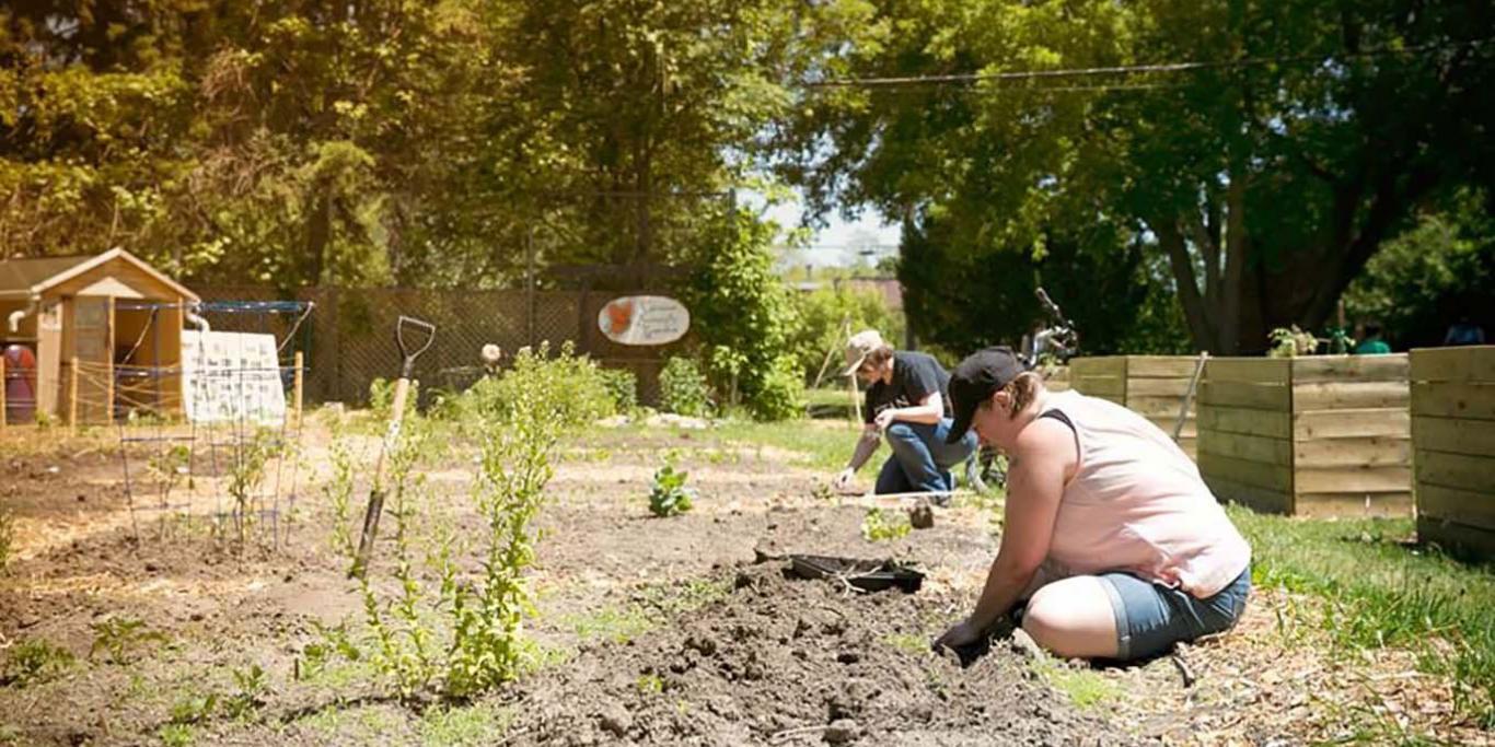people planting a community garden plot