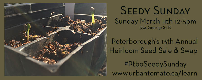 Seedy Sunday 2018
