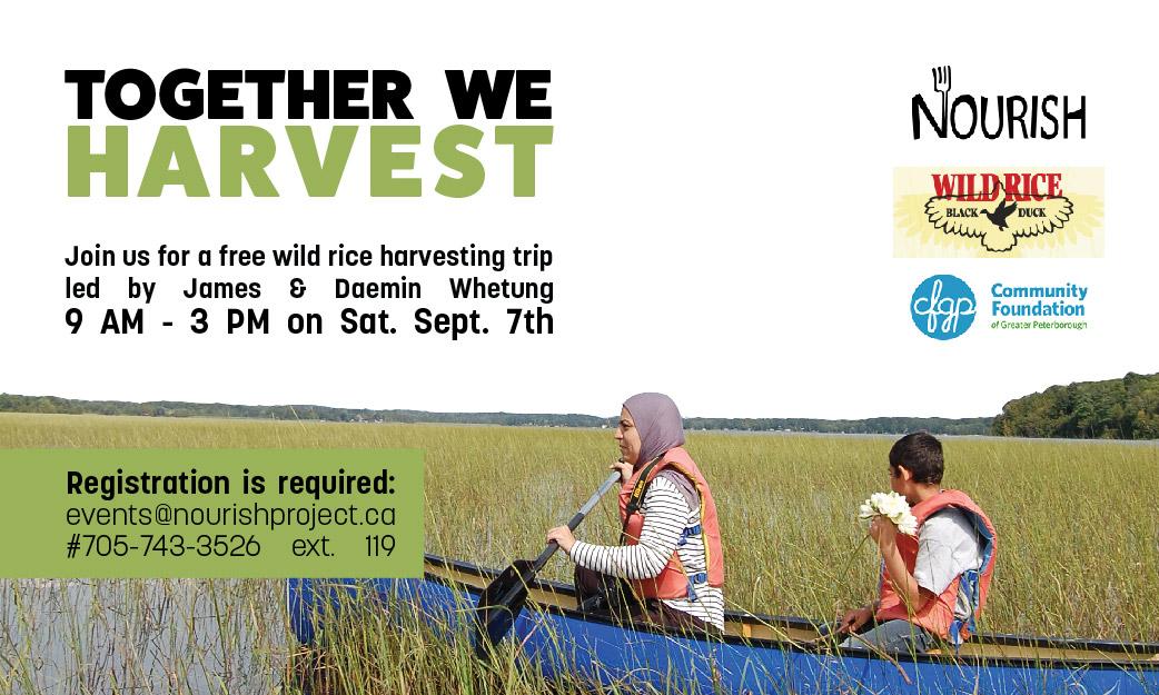 Together We Harvest: Wild Rice Harvesting Trip