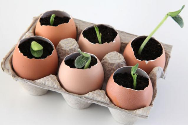 Image of plants sprouting out of eggshells