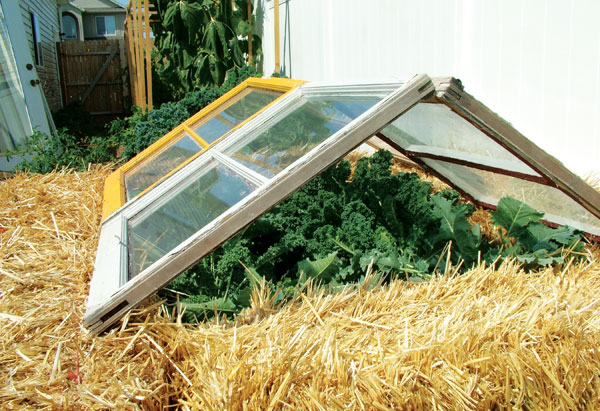 window cold frame