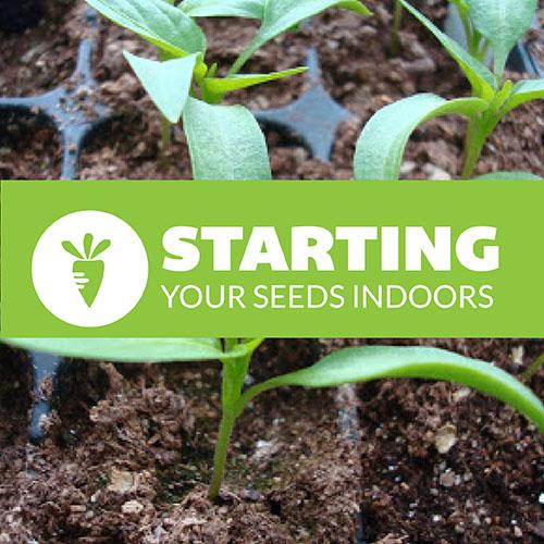 Seed Starting header
