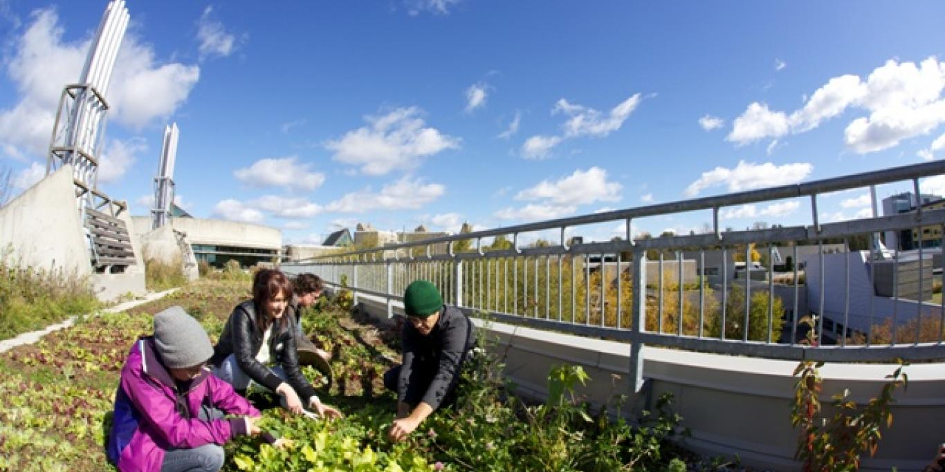 harvesting greens on the rooftop