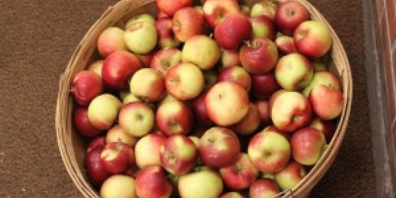 local apples